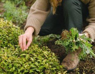 Garden maintainance